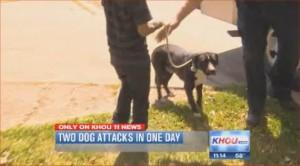 Houston dog bite attorneys Smith & Hassler